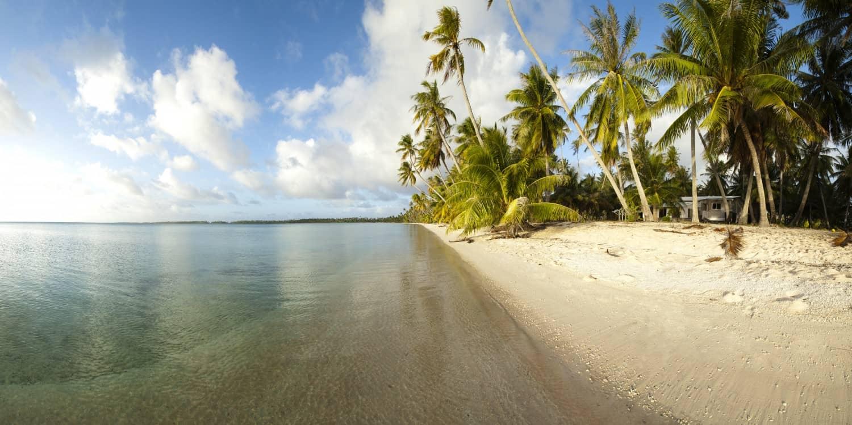Nouvelle caledonie-palmiers-armonie voyage_poitiers