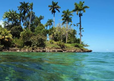Panama-palmiers_armonie voyages_poitiers