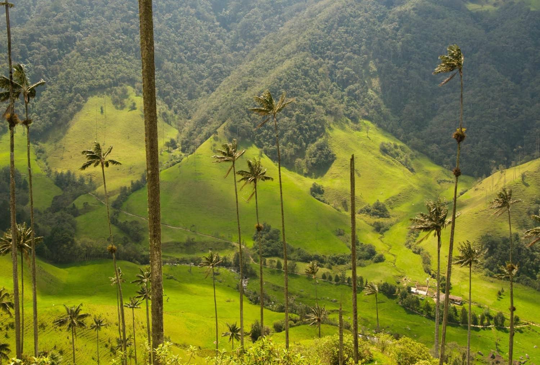 colombie-forêt-armonie-voyages-poitiers