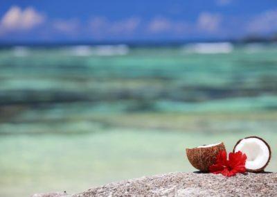 seychelles-noix de coco-Armonie Voyages_Poitiers
